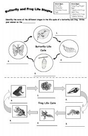 English Worksheet: FROG and BUTTERFLY Life Cycle