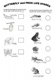 English Worksheets: BUTTERFLY and FROG Life Stages (Version 2)