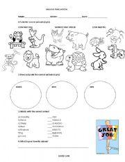 English Worksheet: Animal Test