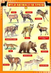 English Worksheet: Wild animals in Spain 1/4 - UPDATED
