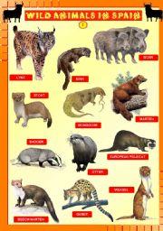 English Worksheet: Wild animals in Spain 2/4 - UPDATED