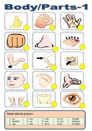 English Worksheets: BODY/PARTS