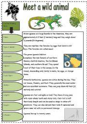 English Worksheets: The Green Iguana