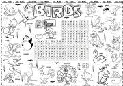 English Worksheets: bird series