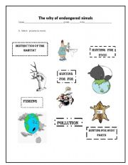 English Worksheets: Why are animals in danger