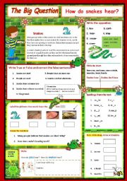 English Worksheet:   How do snakes hear? - A Science Question  2/10