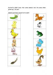 English Worksheets: Animal Matching