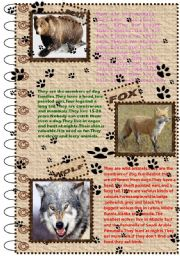 English Worksheets: FACTS ABOUT ANIMALS SET (wild animals 1)