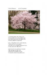 English worksheet: Cherry blossom poem
