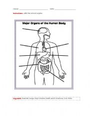 English Worksheets: internal organs