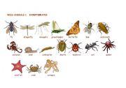 English Worksheets: Wild animals:Invertebrates