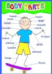BODY PARTS - ESL worksheet by jdrc