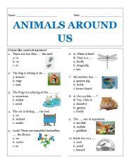 English Worksheets: Animals Around Us
