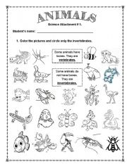 Dynamite image regarding invertebrates worksheets free printable