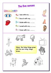 English Worksheets: five senses