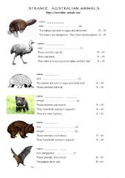 English Worksheet: Strange Australian animals