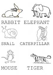 English worksheets: RABBIT,ELEPHANT,SNAIL, CATERPILLAR.... ESL ...