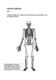 English Worksheets: Label the human skeleton