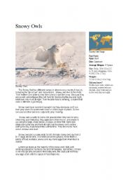 English Worksheets: Snowy Owls