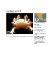 English Worksheets: Axolotl