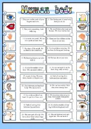 English Worksheets: Human body (BW + the key)