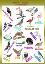 English Worksheets: FAUNA - BIRDS PICTIONARY