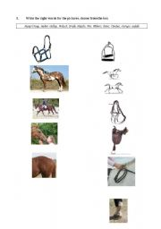 English Worksheet: Horse�s; riding, gear and gaits