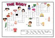 English Worksheet: Crossword : the body