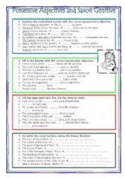 English Worksheets: Possessive adjectives and saxon genitive