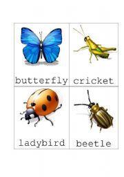English Worksheets: Bug Flash Cards Set 1