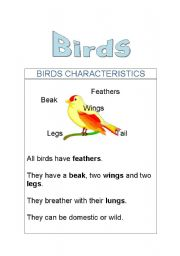 English Worksheets: Birds: Characteristics, parts of the body and domestic and wild and activities.