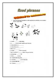 English Worksheets: fixed phrases animals