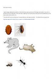 English Worksheets: Pest Prevention