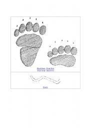 English Worksheets: Animal tracks