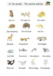 English Worksheets: In the woods + the marine animals