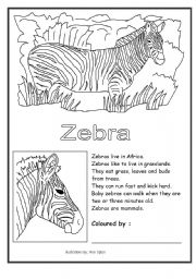 English Worksheets: zebra coloring