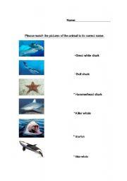 English Worksheets: Ocean animals matching
