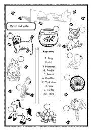 English Worksheets: Pet