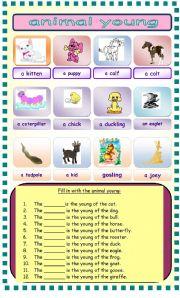 English Worksheets: animal young worksheet