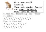 English Worksheets: Mice Are Nice