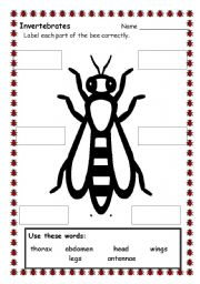 Printables Insect Body Parts Worksheet english worksheets bee parts worksheet with this the students learn body of insects