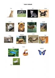 English Worksheets: Some Animals
