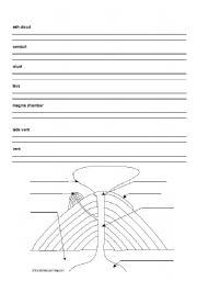 English worksheets: Parts of a Volcano