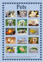 English Worksheets: pets
