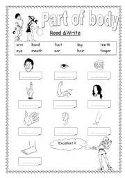 English Worksheets: Part of body