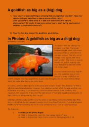 English Worksheets: A GOLDFISH AS BIG AS A BIG DOG