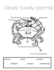 English Worksheets: Parts of a Crab