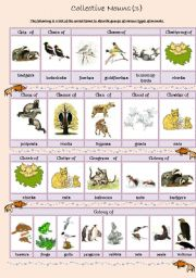 English Worksheets: Collective Nouns (animals) 3