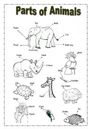 ... > Working with the dictionary > Parts of animals- Picture Dictionary
