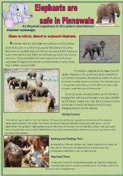 English Worksheets: Elephants are safe inPhinnawala